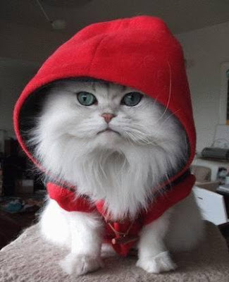 http://bp0.blogger.com/_6dngziSFeMU/Re_doy2MfpI/AAAAAAAAAB8/TIPxugy8xMo/s400/little-red-cat.jpg