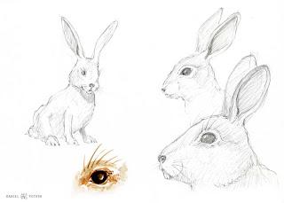 Les Dessins De Daniel Croquis D Un Lapin Sketch Of A Rabbit