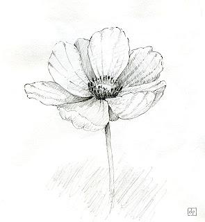 Les dessins de daniel croquis d 39 une fleur sketch of a - Fleur simple dessin ...