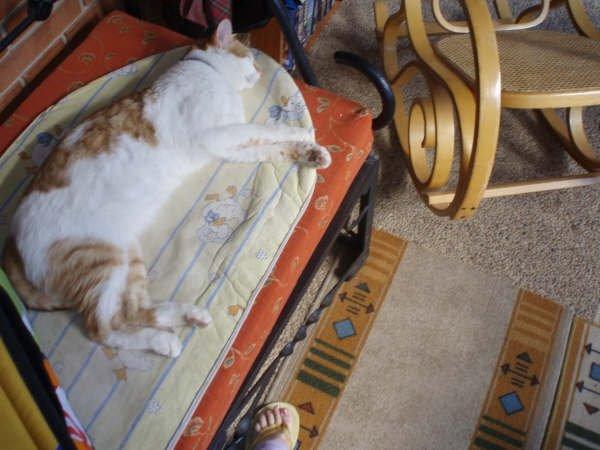 mi bebe gato durmiente