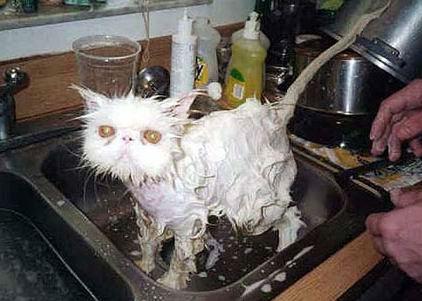 baño gatuno