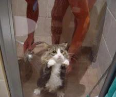 no me resisto a la tentación de llenar este blog de gatos