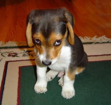 Este perrito encantador que escucha sumiso lo que le dices....pobrete!