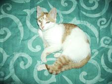 gatito mio bebé
