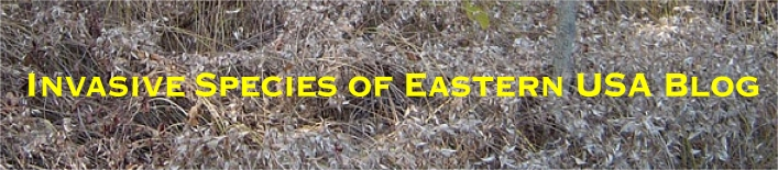 Invasive Species of Eastern USA Blog