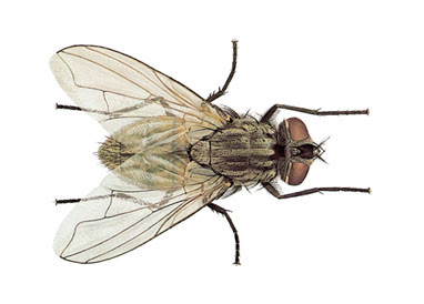 Image result for The average speed of a house fly is 4.5 miles per hour.
