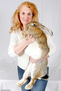 World's Biggest Rabbit