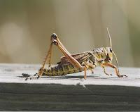 Cricket dormitory