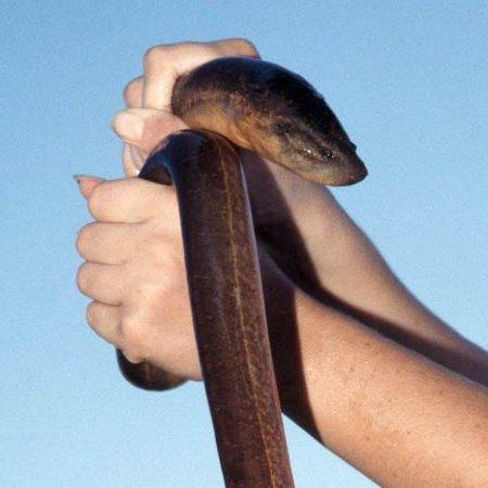 Chinese chef eel anus consider