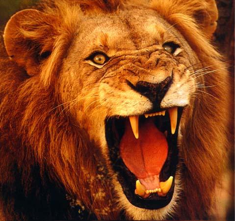 http://1.bp.blogspot.com/_6q-f-zD4xPY/S9Z_t1xx3FI/AAAAAAAAW2Q/Oq8w0LnWsLA/s1600/lion.jpg