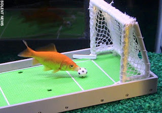 Comet, the soccer playing goldfish