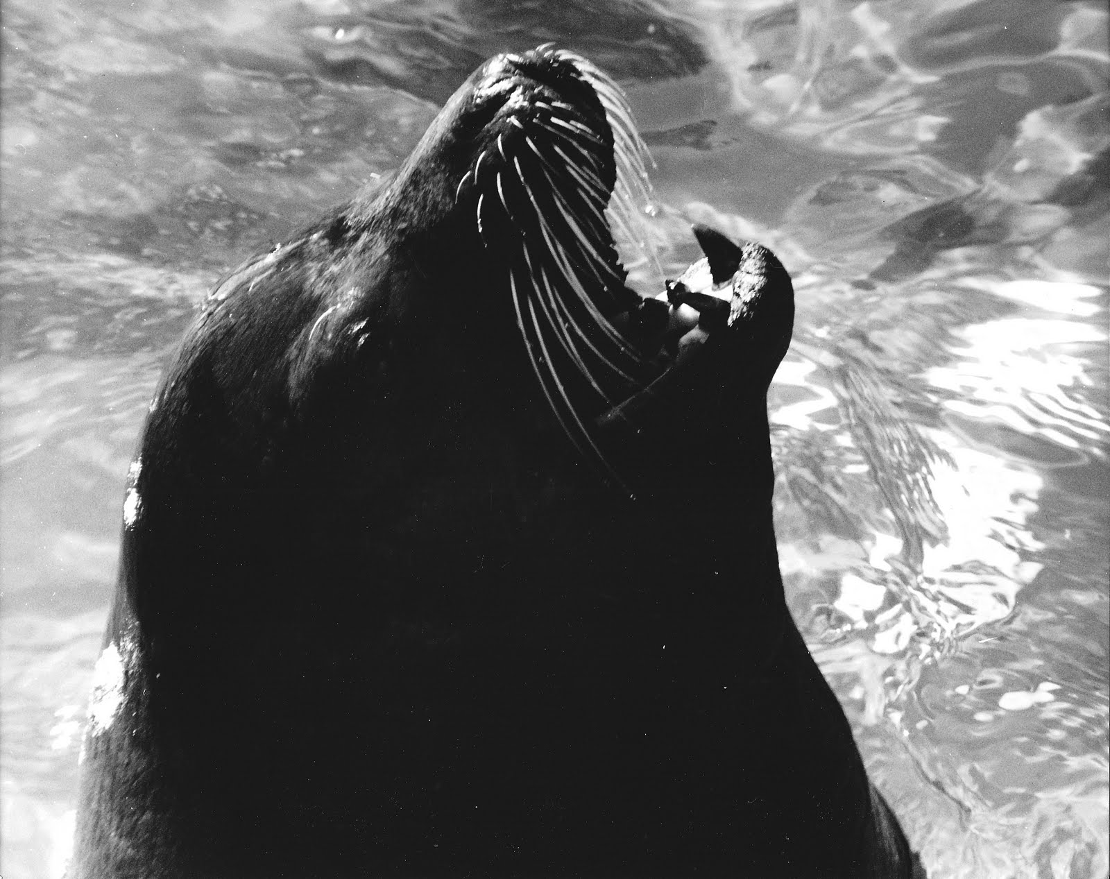 GordonGrice.com: Horrified mum watches sea lion attack boy ...