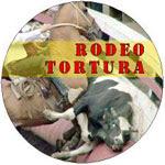 El Rodeo,una tradicion donde el sufrimiento es un espectaculo