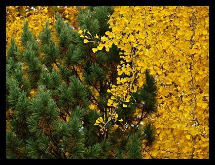 Kazde Zdjecie Jest Wspomnieniem Wiersze O Jesieni