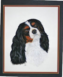 MY PET PORTRAITS