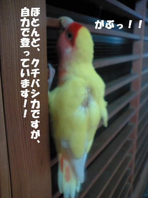 [523rtVFTS0001+(33)  ]