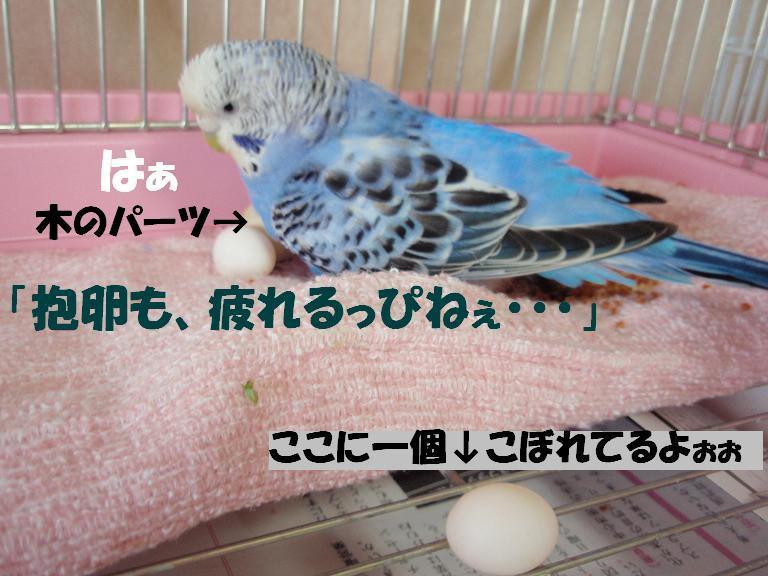 [P5070079r.JPG]