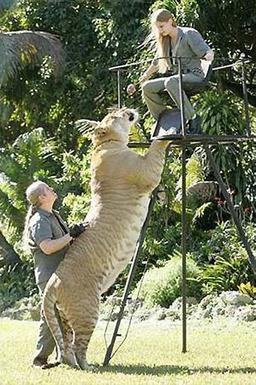 Atapattama: Biggest Animals in the World