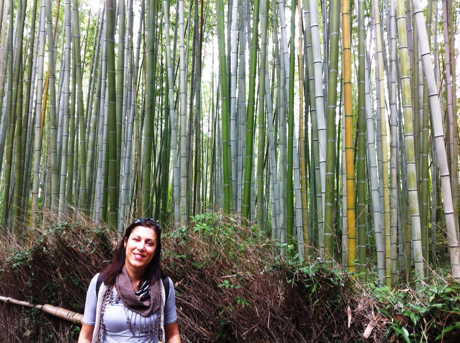Bosco Di Bamb.Giappone Volo Di Andata E Forse Ritorno Il Bosco Di