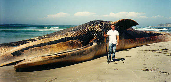 Largest Animal In The World Ever Lived - photo#20
