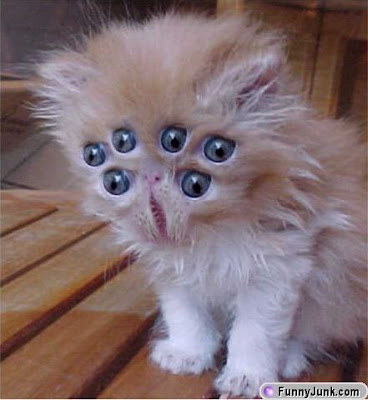 http://bp2.blogger.com/_76IUaRvRoMU/RmPQCtb3kYI/AAAAAAAAAYA/NW8RgjWwvAg/s400/alien_kitty.jpg