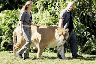 liger picture