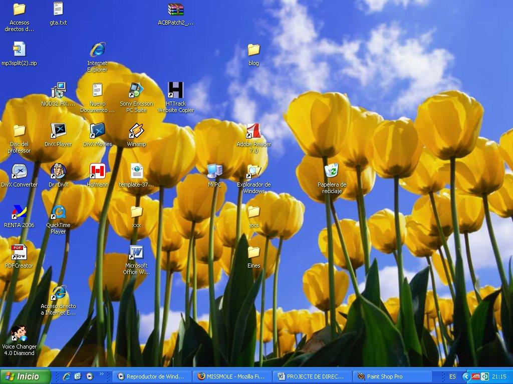 Windows XP Tulips