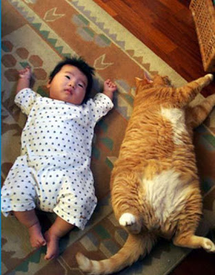funny picture cat baby kid04 pictures