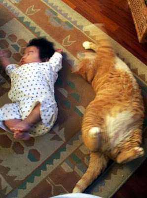 funny picture cat baby kid03 pictures