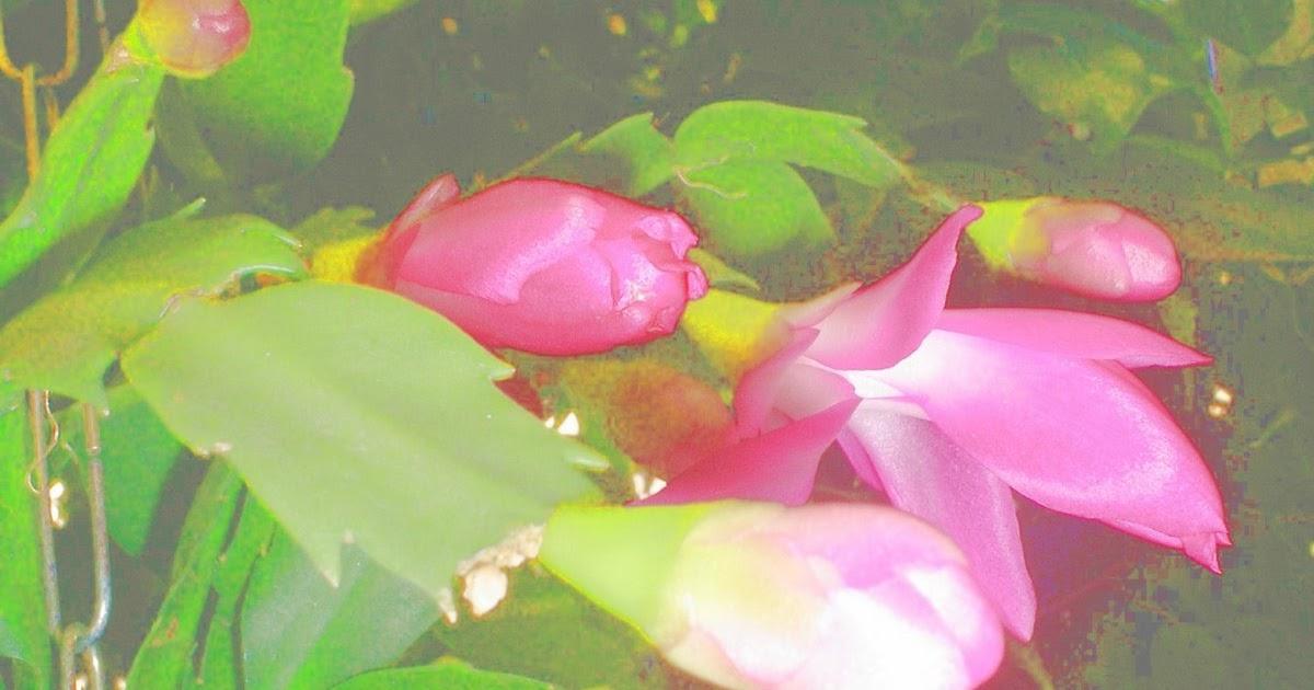 Hoje é Sabado Engraçado: Textos De Carla Pianchão: Flores No Meu Pequeno Jardim