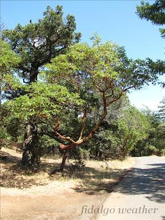 Madrona and Douglas Fir are abundant  in Washington Park