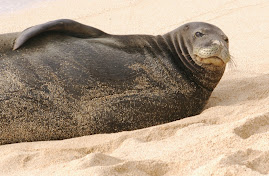 Hawai'ian Monk Seal