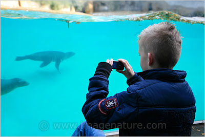Boy photographing marine seals in Berlin zoo