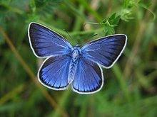 Om rätten att döda fjärilar - Birger Schlaug