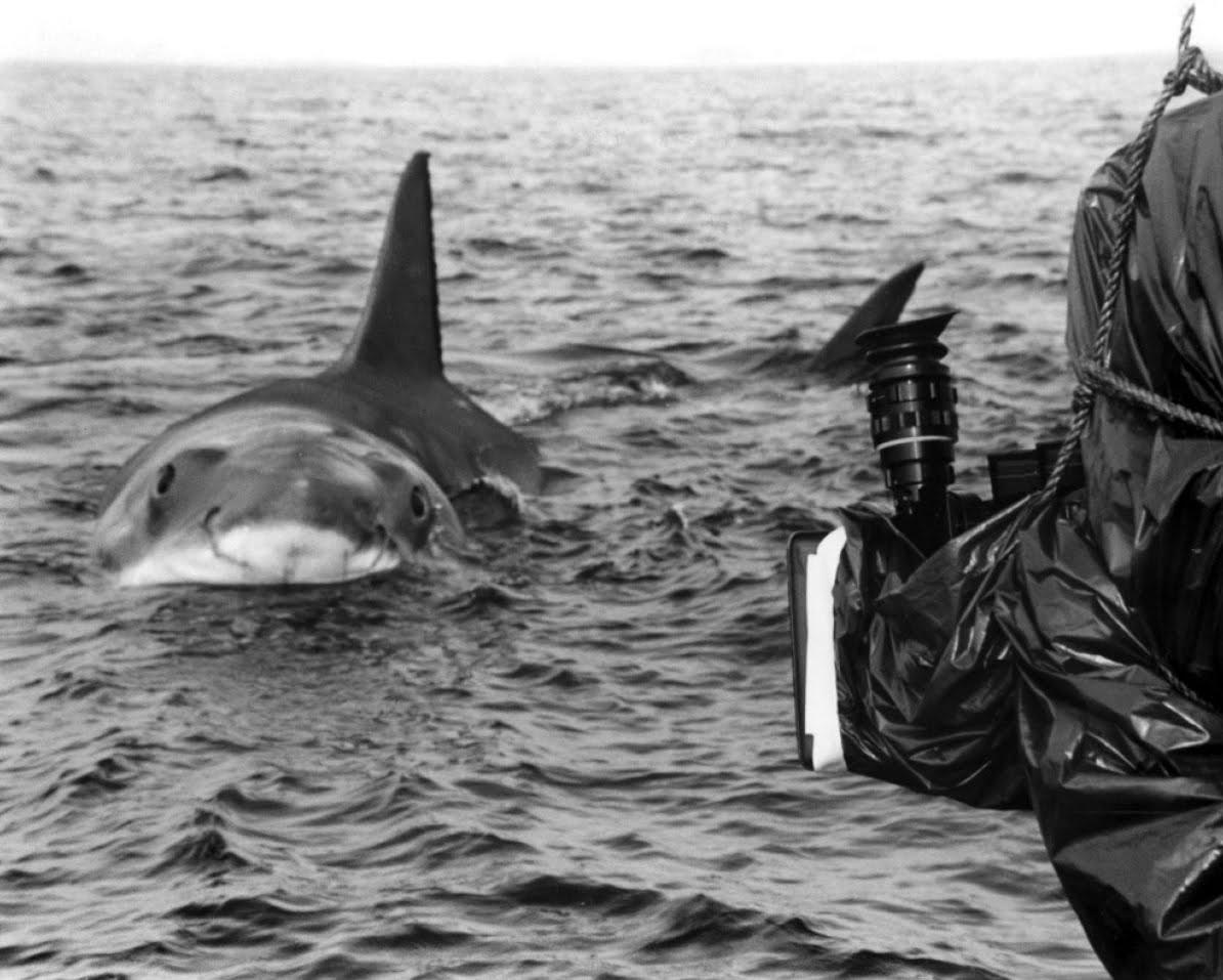 Movie Memorabilia Emporium Jaws 1975 Promotional Photos