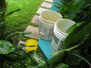 Collecting rainwater in a bucket, La Ceiba, Honduras