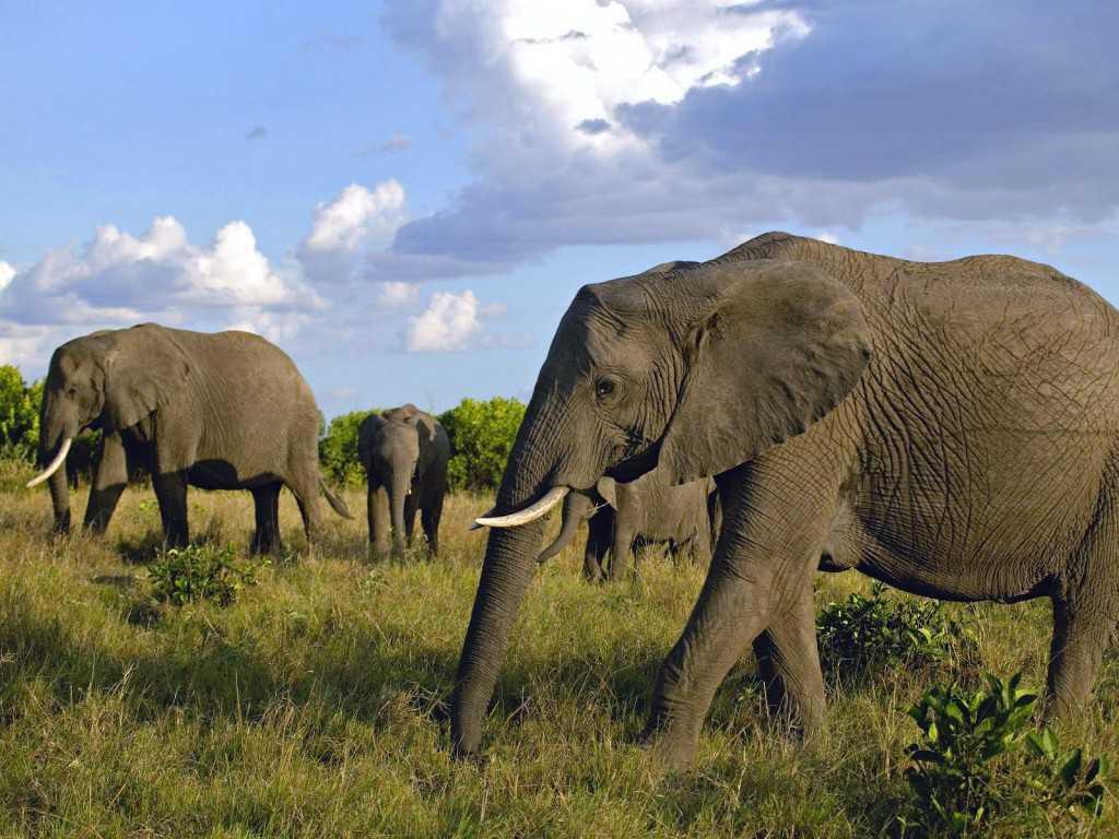elephants wallpapers world - photo #32