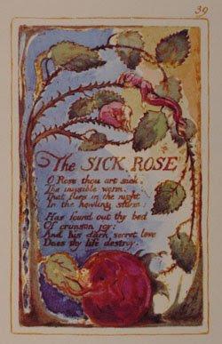 william blake poesia inglesa la rosa enferma the doors english poetry the sick rose jim morrison blog bogota