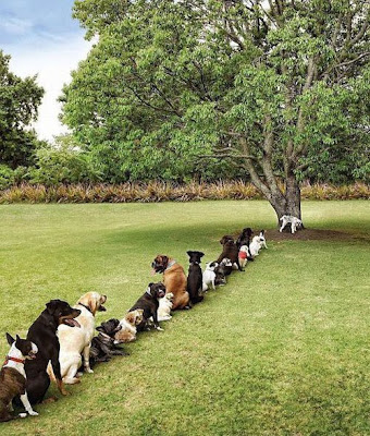 dogs-standing-in-queue-to-pee-on-tree