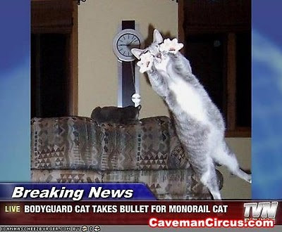 funny-cat-on-tv