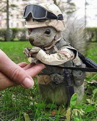 Algum americano veste um esquilo com um uniforme militar.