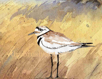killdeer+5+copy Killdeer Painting on Ebay