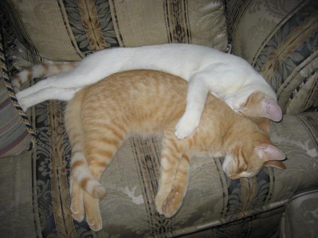 EL MUNDO FELINO. GATOS: Fotos de gatitos