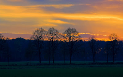 Hd Painting Wallpapers Download Sunset Celebration Behind The Tree Images Nature Sunset