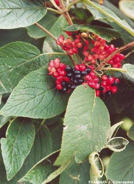 Restoring The Landscape With Native Plants: That's ...