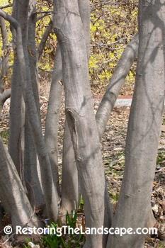 Restoring The Landscape With Native Plants Native Plant