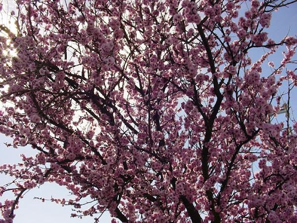 Goodbye Winter, Hello Spring!!!
