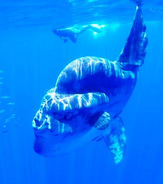 El pez mas grande del mundo.