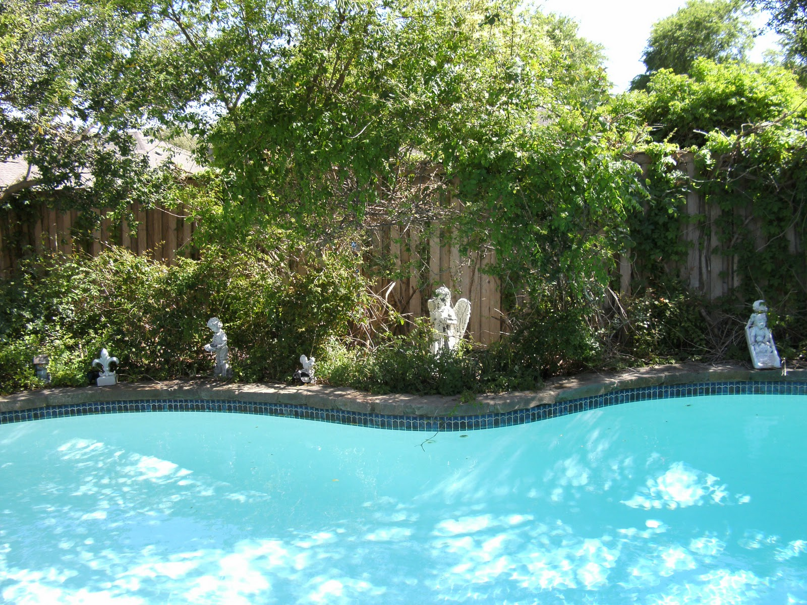 Ducks in my pool and other stories ducks in my pool - Duck repellent for swimming pools ...