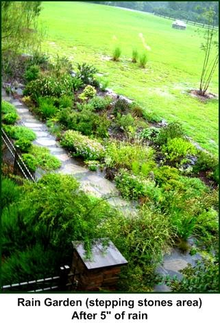 defining your home  garden and travel the rain garden in